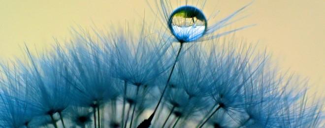 Drop-Water-On-Dandelion-Flower-Macro-Wallpaper-HD