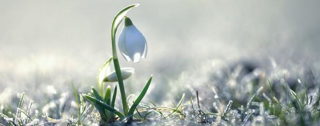 Flower-as-Snowdrop-2560x1600