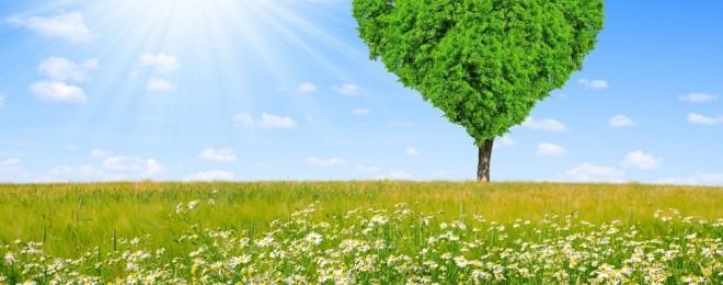 spring-meadow-field-tree-sunshine-love-heart-tree-spring-the-field-meadow-chamomile-tree-heart (1)