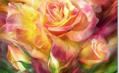 birth-of-a-rose-sq-carol-cavalaris