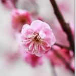 【Diary】此処に春