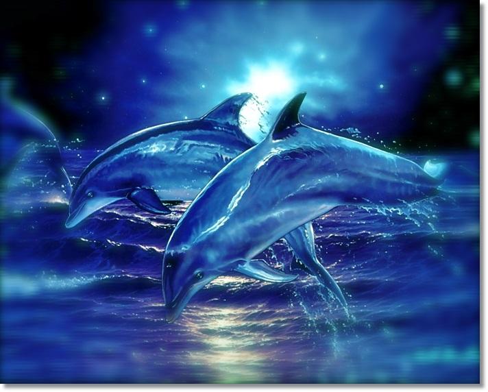 desktop-backgrounds-backgrounds-graphics-digital-dolphins7