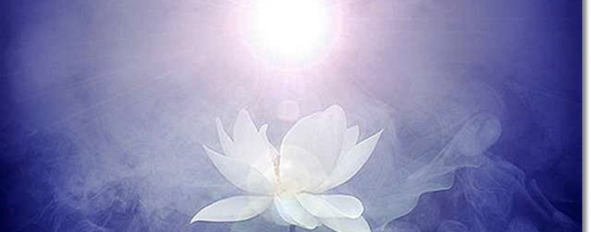 white-lotus-light